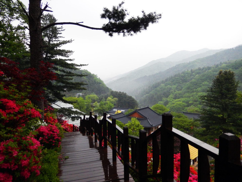Le Jardin du Matin Calme - Montagne