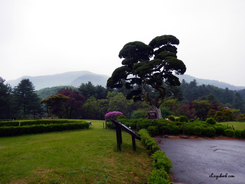 Le jardin du Matin Calme
