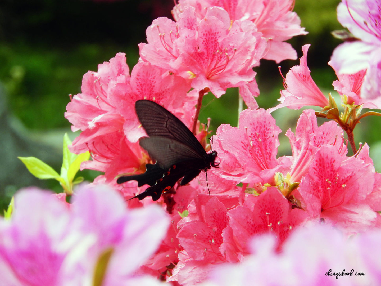 Jardin du Matin Calme - Sunken Garden