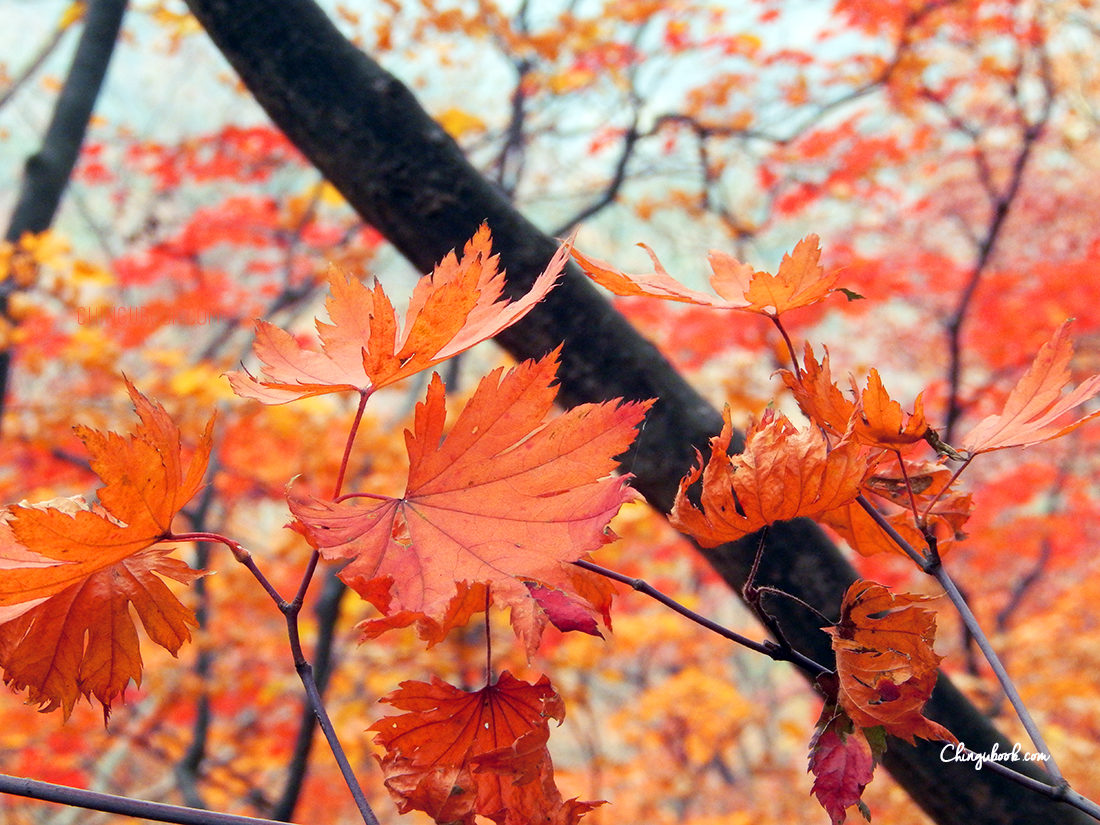 Voyager en Corée du sud en automne