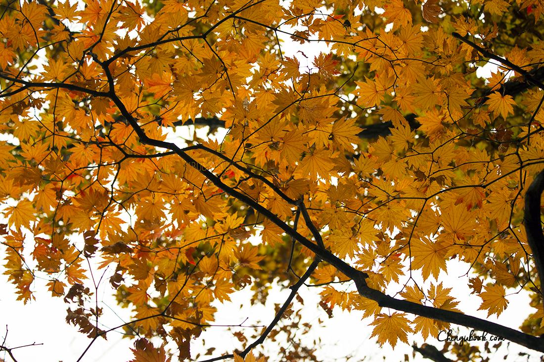 automne à Séoul