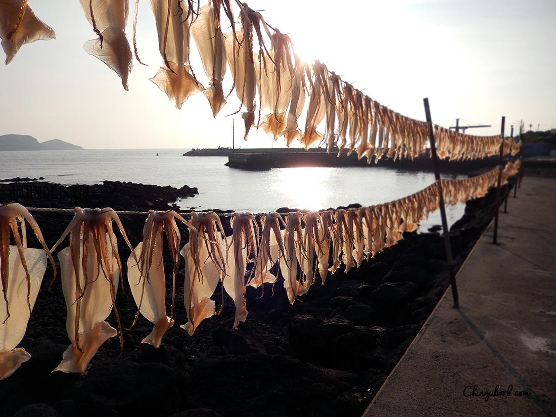 calamar Jeju