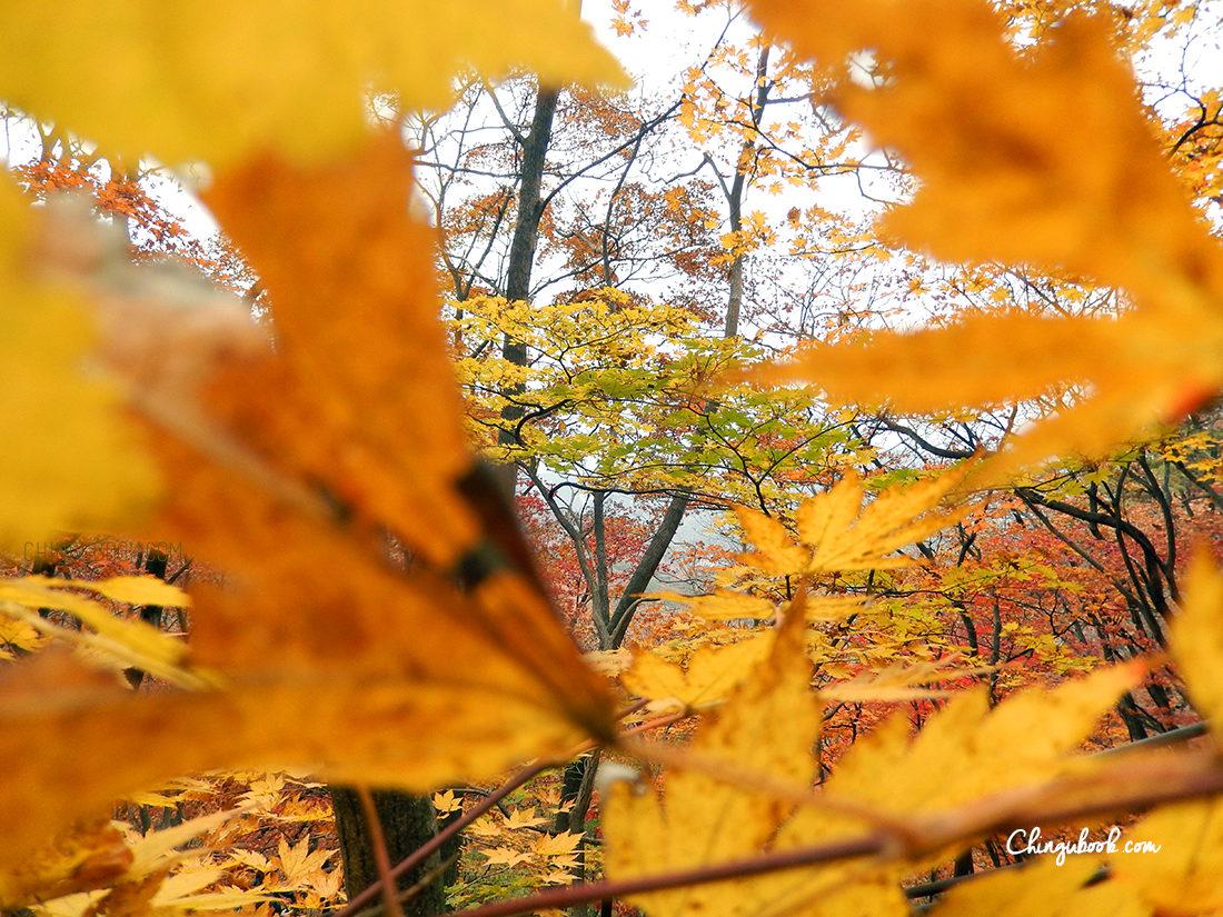 l'automne en Corée du sud